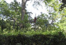 Le vrombissement des tronçonneuses annonce le printemps mieux que n'importe quel chant d'oiseau